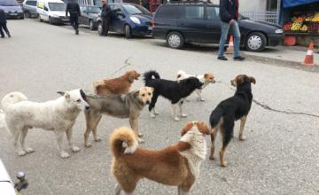 ზუგდიდის მერიამ მიუსაფარი ძაღლების თავშესაფარში გადასაყვანად ტენდერი გამოაცხადა